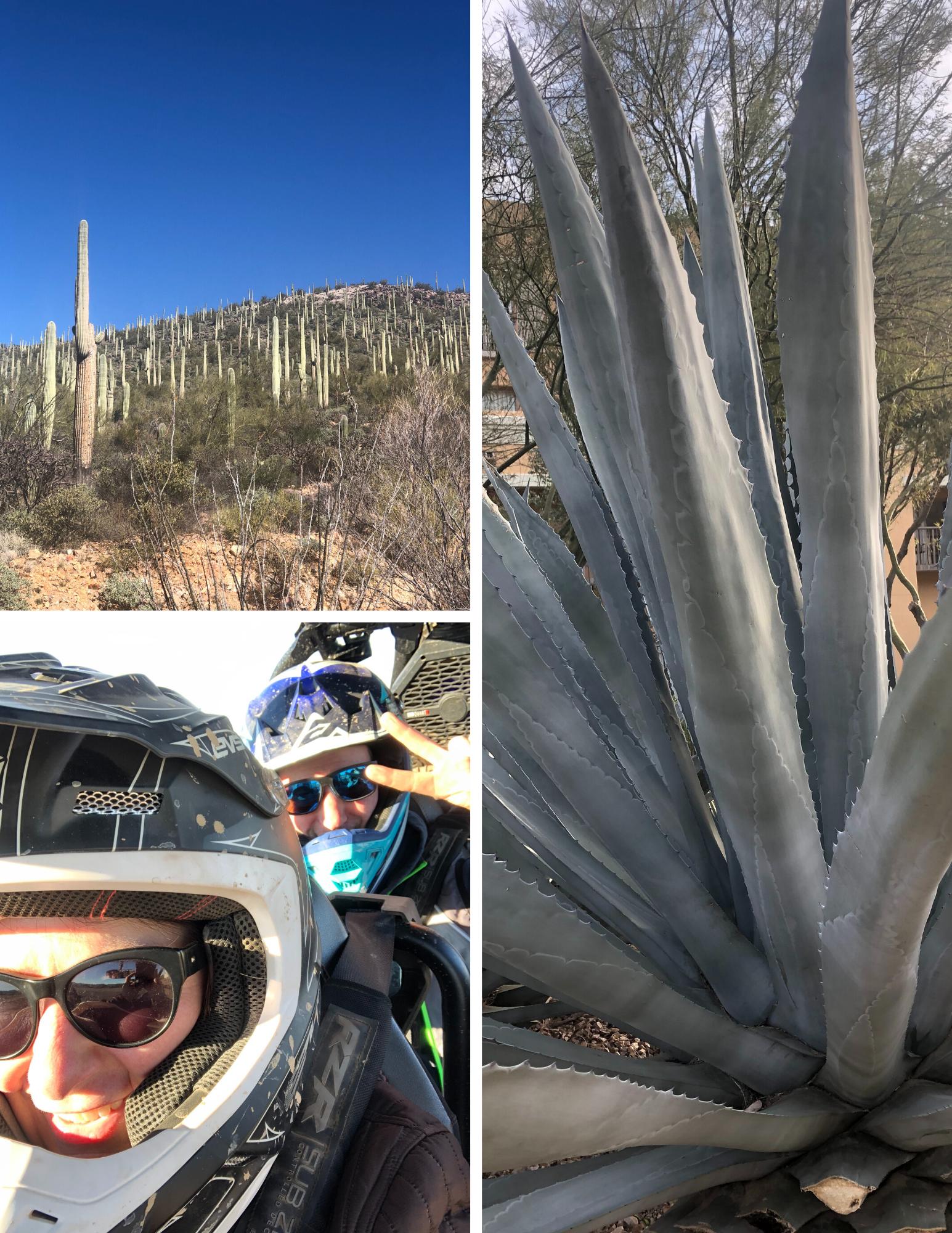 Tucson Collage-2